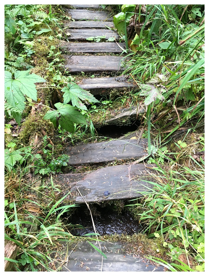 Broken Bridges Olympic National Park Washington Pacific Northwest