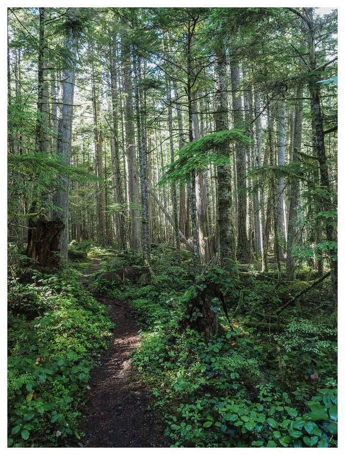 Heart of the Forest Trail Olympic National Park
