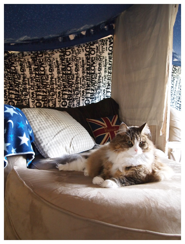 Triskele in a blanket fort