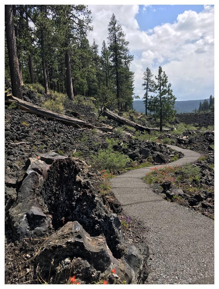 Path through Lava Cast Forest