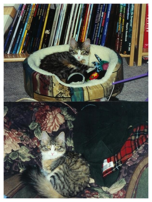 Triskele as a kitten