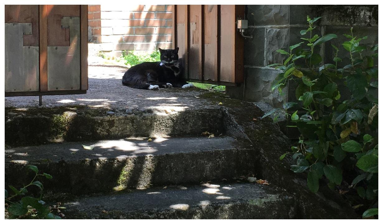 Portland Cat neighborhood