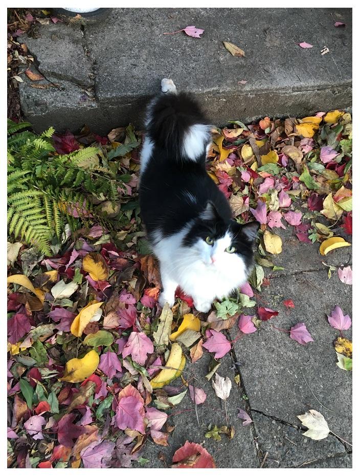 autumn leaves cat cats portland pdx