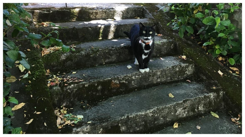 Cat in Portland
