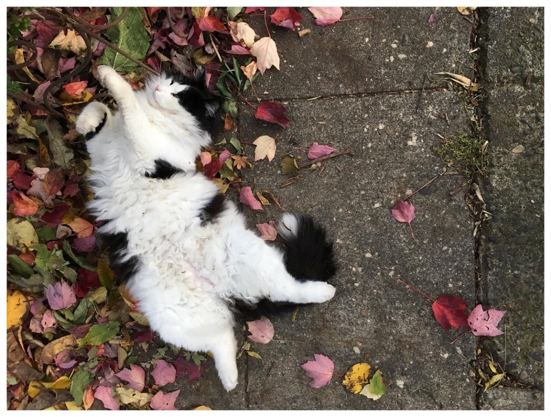 cat portland cats