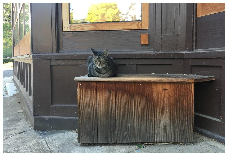 portland cat cats