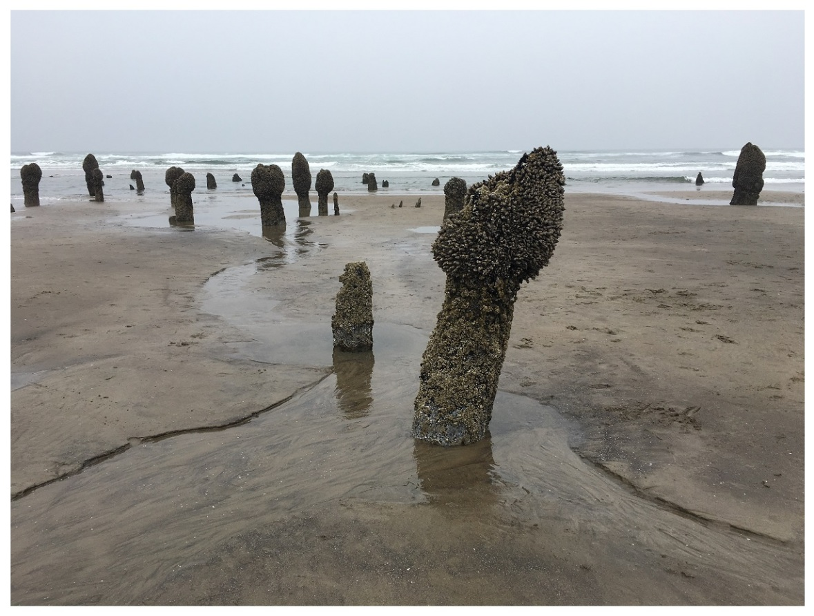 Neskowin Ghost Forest