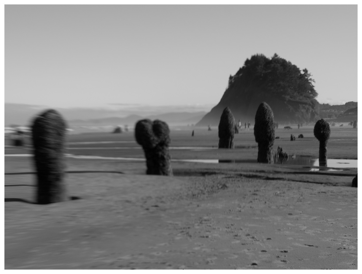 Neskowin Ghost Forest in Black and White