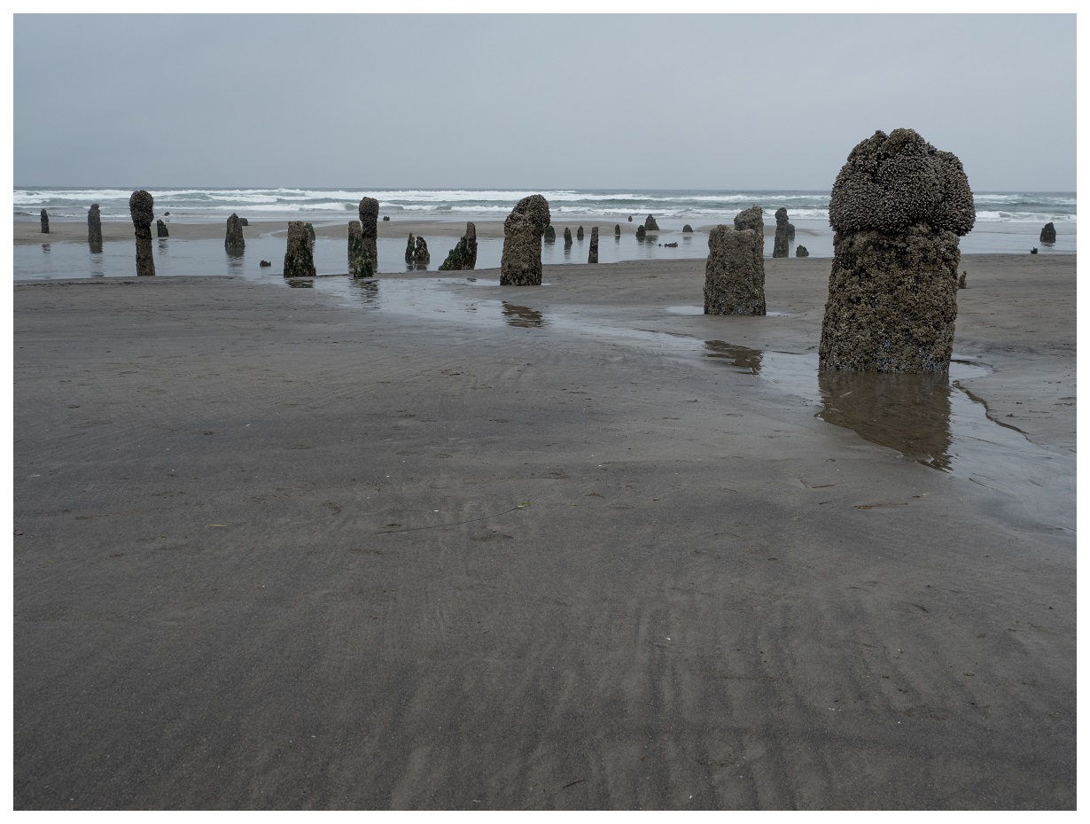 Neskowin Ghost Forest In The Rain